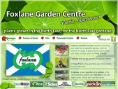 Foxlane Garden Centre -  Plants grown in the North East for the North East gardener.