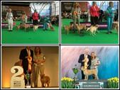 World Dog Show 12-8-2018