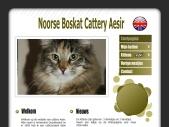 Noorse Boskat Cattery Aesir