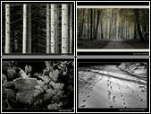 En forêt éperdument