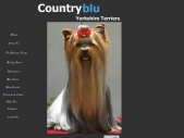 Countryblu Yorkshire Terriers - Champion Yorkshire Terriers in South Africa