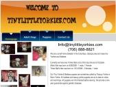 www.TinyLittleYorkies.com