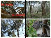 Des koalas en Australie