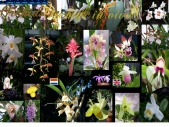 Orchids in vivo
