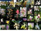 Orchids in vivo