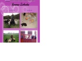 Stormrose Labradors