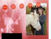 Met Paarden werken