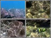 Poissons et coraux Thailande