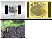 Moringa Oleifera 2013