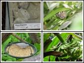 Vlinders aan de Vliet 10-06-08