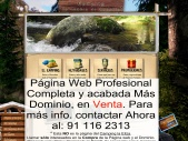 Camping cerca de Madrid PAGINA EN VENTA!
